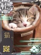 猫 改になったら