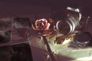 薔薇とカメラ