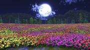 【MMDステージ配布】夜のお花畑 X1【スカイドーム】