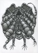 メカエリマキトカゲ