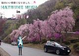 花見ドライブin上野村