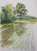 田に映る木
