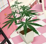 【MMD-OMF5】例の観葉植物【配布】