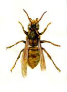 蜂の精密描写!