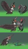 インファイト(鳥)