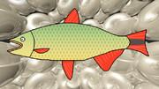 ドラド(魚)とパールの貝殻