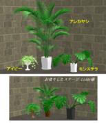 観葉植物 配布