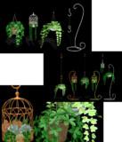 吊り下げ植物 配布