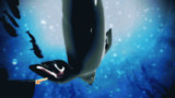 【GIF】wakasagi swim