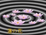 【3Dモデル】蓮の花【配布あり】