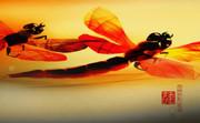 赤蜻蛉とぶ風景 01