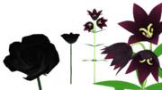 【第参回MMDホラー夏祭り参加賞】 黒薔薇とクロユリ