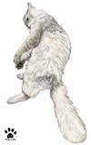 猫おっさんの背中