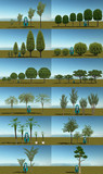 樹木類2015-1 10.29修正・追加あり
