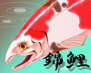 錦鮭(ニシキゴイ)
