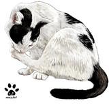 野良猫の毛づくろい
