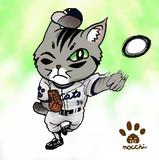 シマ猫カブの野球