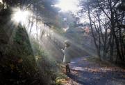 雪歩 秋の朝 写真合成