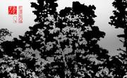 紅葉深秋の候 11