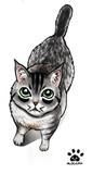 でふぉるめ猫21