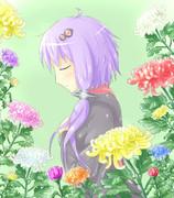 菊に囲まれて