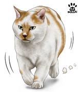 とっとこ栗白猫