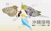 小鳥の侵略作戦