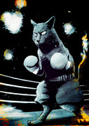 猫ボクサー
