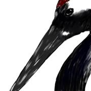 タンチョウ(日本の代表する鶴だそうな)