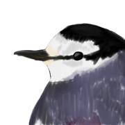 カワセミ(パッと見ペンギン)