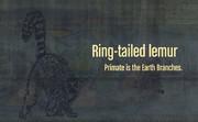 【銃弾アート】Part.67 Ring-tailed lemur【ワオキツネザル】