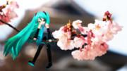 ちっちゃいミク、桜と。