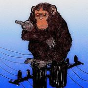 自由を求めた?チンパンジー