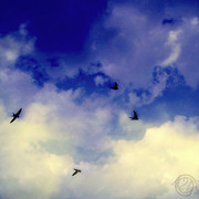Flutter About...