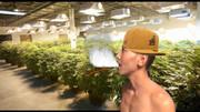 大麻栽培おじさん