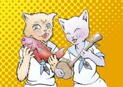 三線 マヤー(ネコ)