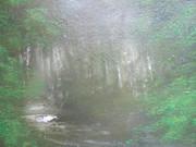 葉陰の小川