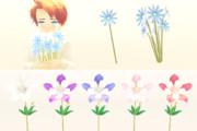 アクレイギアと青い花