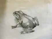 【鉛筆】蛙