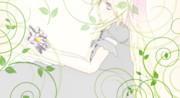蓮の花と白蓮