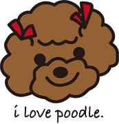 i love poodle.