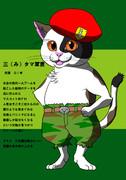 三毛猫の三タマ軍曹