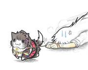 大和子ネコ