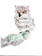 猛禽類フクロウの絵