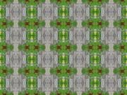 シンメトリー(樹皮と苔)