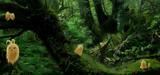 森の中のけだマキマキ