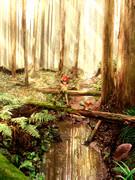 ポニの原始林