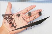 【切り絵】キマリンの訪花