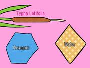 ガマ、六角形、ウェハース