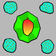 TOM (Turquoise, Octagon, Mango)